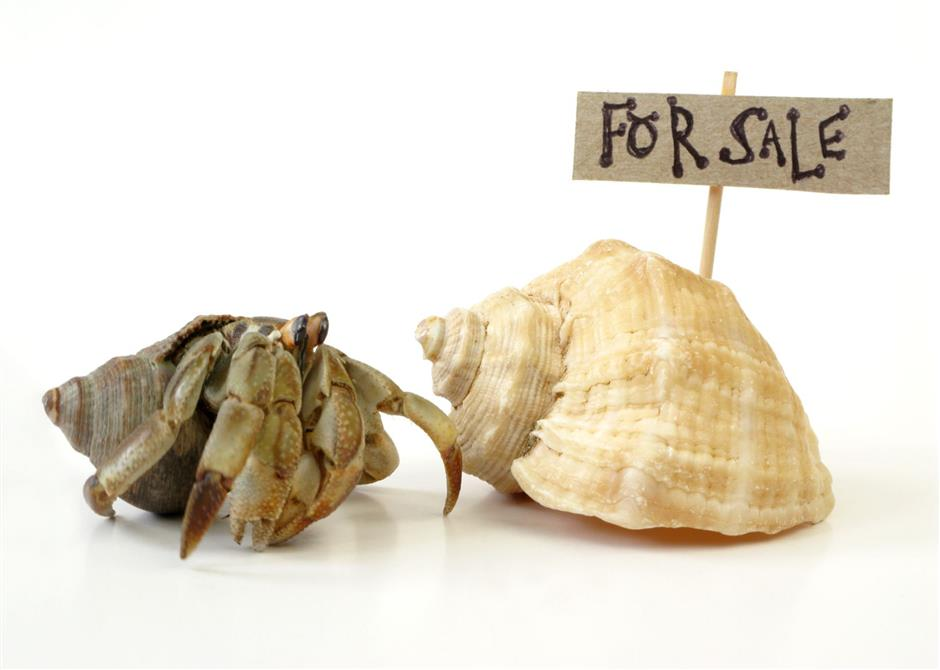 Hermit Crabs Shells For Sale