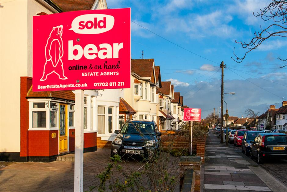 Bear For Sale Boards